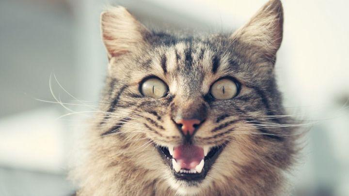 Ca sent le pipi de chat?
