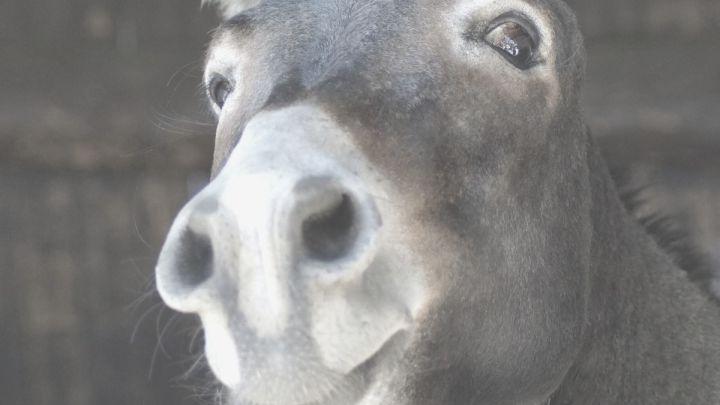 Tu es un âne!