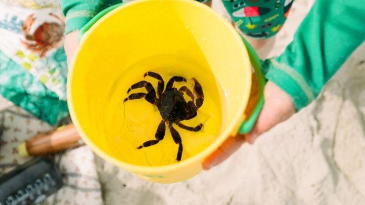 Les crabes dans leseau…